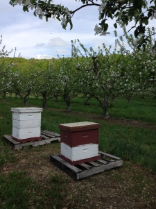 Bees at work '15
