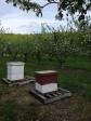 Bees at work '15